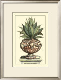 Antique Munting Aloe IV Poster by Abraham Munting