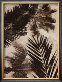 Palms II Poster by J.b. Hall
