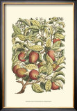 Apple Tree Branch Posters by Henri Du Monceau