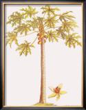 Papaya Tree Framed Giclee Print by Georg Dionysius Ehret