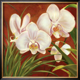 Red Orchid Print by Laurie Snow Hein