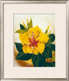 Yellow Hibiscus Posters by Ted Mundorff