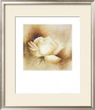 White Rose I Prints by Betty Jansma