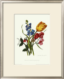 Bouquet with Tulipa Gesneriana Print by Mary Lawrence