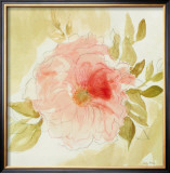 Stardust Peony Prints by Judy Shelby