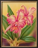 Cattleya Framed Giclee Print by  Hale Pua Studio