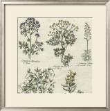 Delicate Garden III Poster