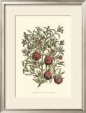 Pomegranate Tree Branch Prints by Henri Du Monceau