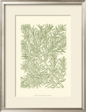 Mossy Branches I Print by Henri Du Monceau