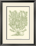 Mossy Branches II Prints by Henri Du Monceau
