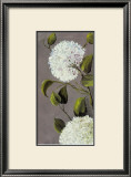 Hortensia Ideal I Prints by Ximena