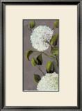 Hortensia Ideal I Prints by  Ximena