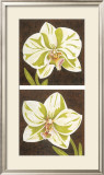Surabaya Orchids Prints by Judy Shelby