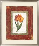 Tulip de Gesner Print by Carol Robinson
