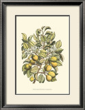 Pear Tree Branch Posters by Henri Du Monceau