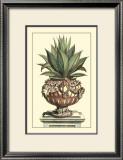 Antique Munting Aloe IV Posters by Abraham Munting