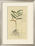 Tropical Grasses II Prints by A. Descubes