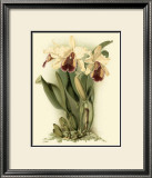 Dramatic Orchid II Posters by J.k. Mosferlander