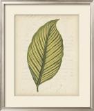 Textured Leaf Study IV Art