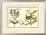 Garden Botanica IV Art