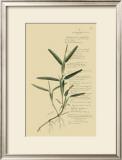 Tropical Grasses IV Art by A. Descubes
