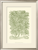 Mossy Branches IV Prints by Henri Du Monceau