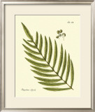 Antique Fern I Posters