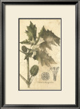 Botanica I Prints by Ludwig Van Houtte