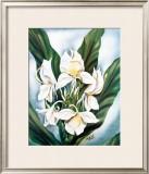 White Ginger Framed Giclee Print by Ted Mundorff