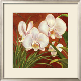 Red Orchid Prints by Laurie Snow Hein