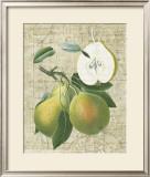 Orchard Medley II Prints