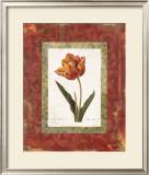 Tulipe Cultivee Prints by Carol Robinson