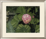 Enchanting Lotus Prints by Gloria J. Callahan