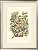 Cherry Tree Branch Poster by Henri Du Monceau