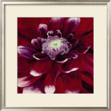 Red Dahlia Posters by Beth Winslow