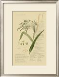Ornamental Grasses V Print by A. Descubes