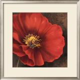 Rouge Poppies I Prints by Jordan Gray
