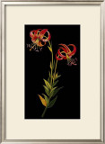 Exotic Beauty II Prints by Jaggu Prasad
