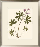 Pressed Botanical III Prints