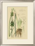 Ornamental Grasses VI Prints by A. Descubes