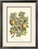 Quince Tree Branch Prints by Henri Du Monceau