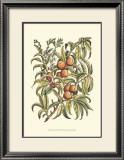 Peach Tree Branch Print by Henri Du Monceau