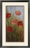 Poppy Morning Glory I Prints by  Nan