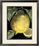 Fragrant Citrus I Print by  Volkamer