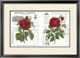 Heirloom Roses Art by Sarah Elizabeth Chilton