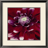 Red Dahlia Poster by Beth Winslow