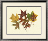Tulip Tree, Sweet Gum and Scarlet Oak Prints by  Denton