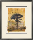 Presidio Cypress Study I Prints by Donald Farnsworth