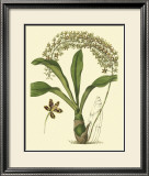 Antique Orchid Study IV Poster by Syndenham Edwards