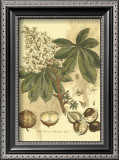 Antique Horse Chestnut Tree Prints by  John Miller (Johann Sebastien Mueller)